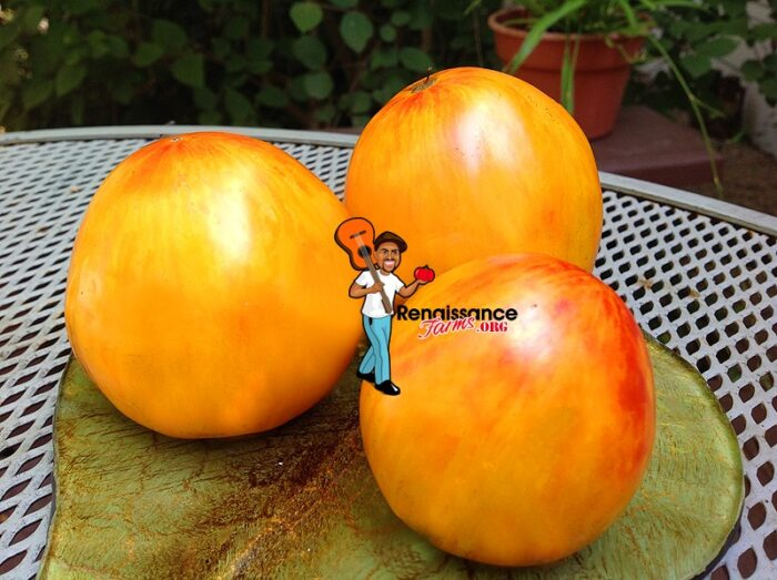 Beauty Queen Heart Tomato Image