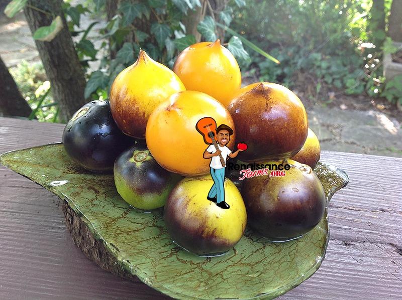 Belle Coeur Gelb Tomato