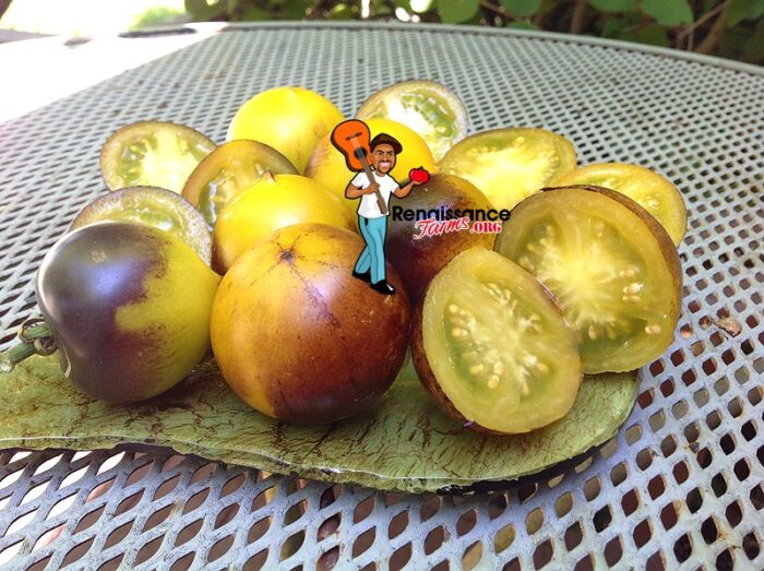 Belle Coeur H34 Gelb Tomato