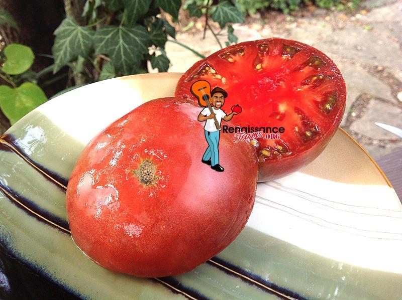 Big Cheef Tomato 2018