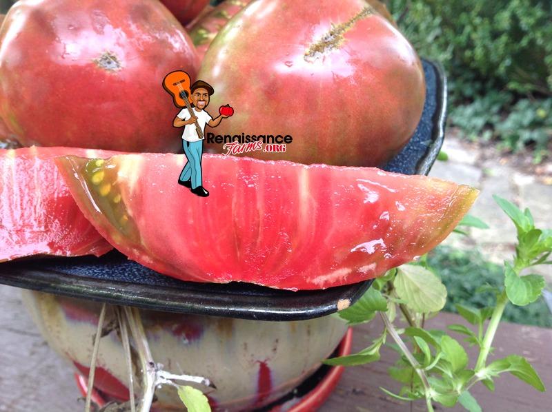 Big Cheef Tomato Picture