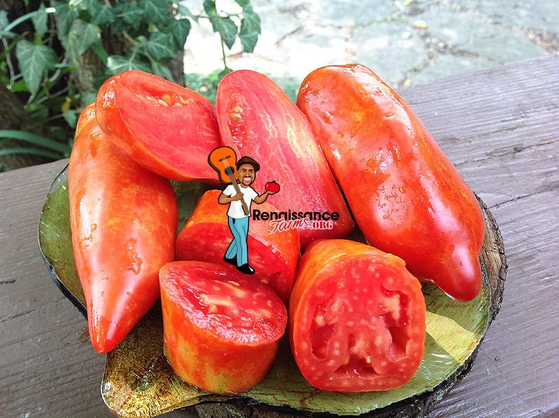 Big Ray's Argentinian Paste Tomato