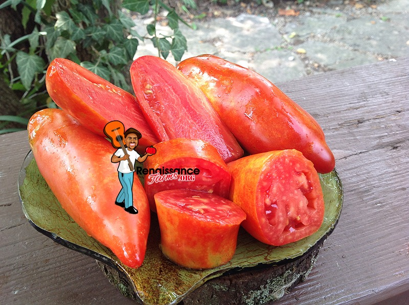 Big Ray's Argentinian Paste Tomato Pictures