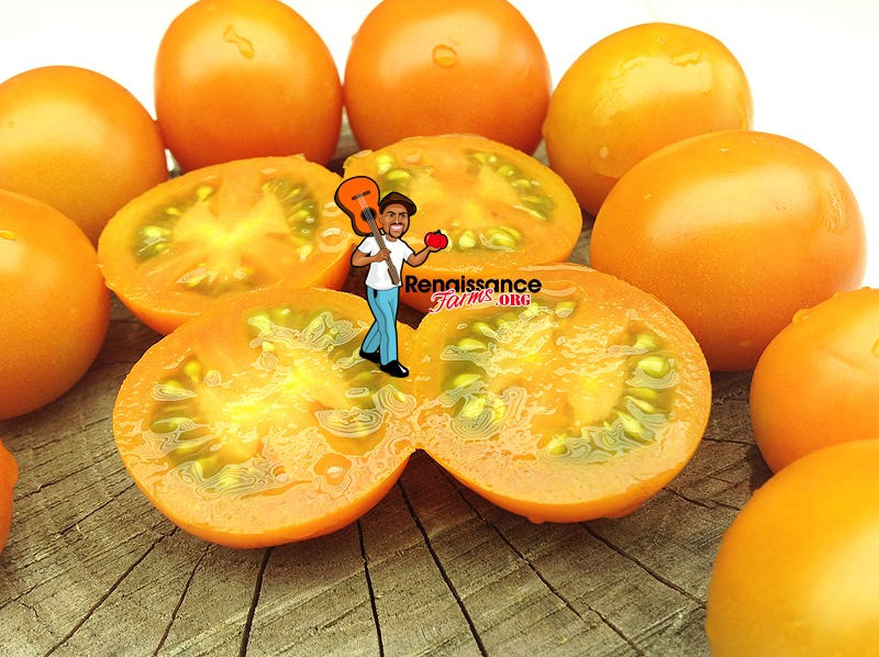 Big-Sungold-Select-Tomato
