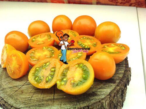 Big-Sungold-Select-Tomato-Image
