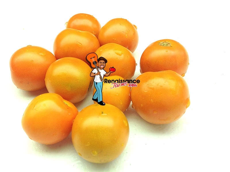Big Sungold Select Tomato