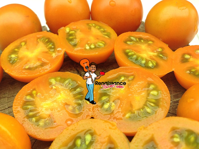 Big Sungold Select Tomatoes
