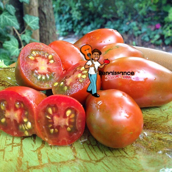 Black-Dragon-Tomato