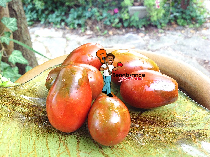 Black Dragon Tomato Image