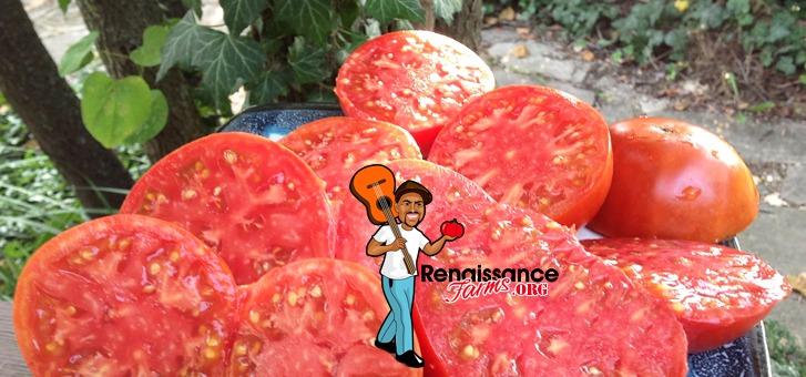 Black Mountain Pink Tomato 2018