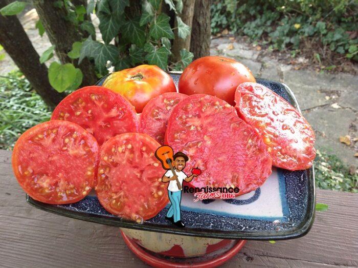 Black Mountain Pink Tomato