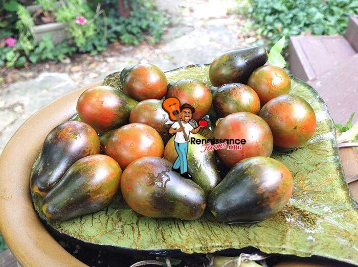 Blue Keyes Tomato