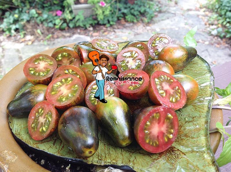 Blue Keyes Tomato Image