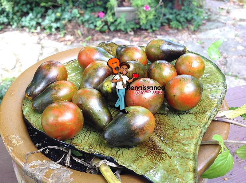 Blue Keyes Tomatoes