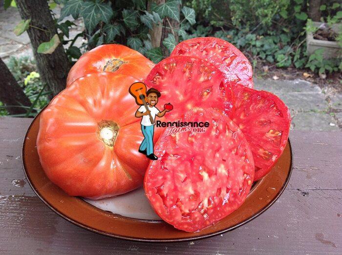 Brutus Magnum Tomato 2019