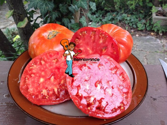 Brutus Magnum Tomato