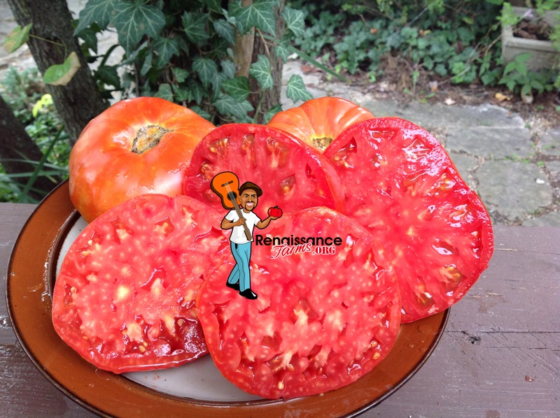 Brutus Magnum Tomato Heirloom