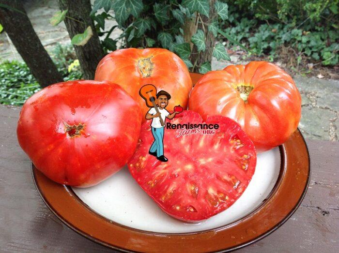Brutus Magnum Tomatoes