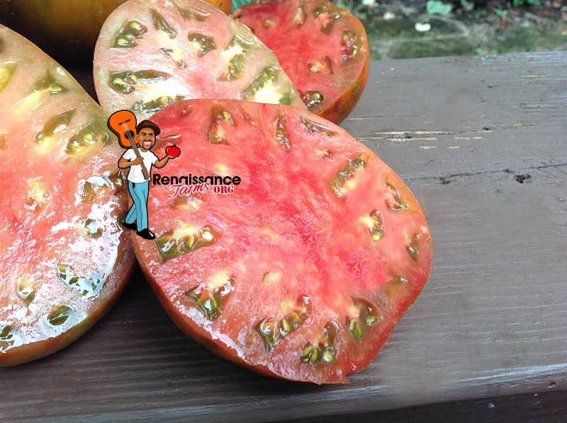 Buffalo Soldoer Tomato Picture