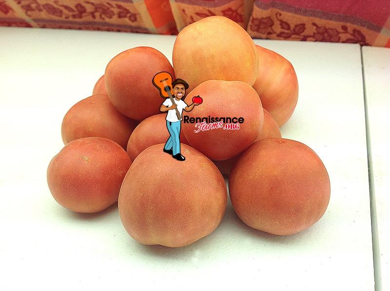 Bushy Chabarovsky Dwarf Tomato 2018