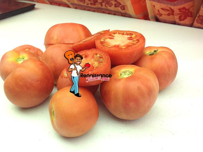 Bushy Chabarovsky Dwarf Tomato