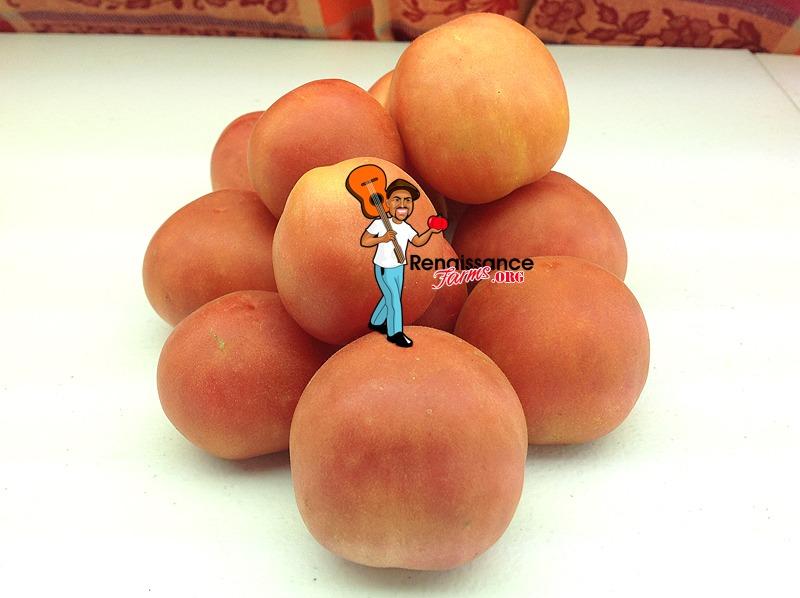 Bushy Chabarovsky Dwarf Tomatoes
