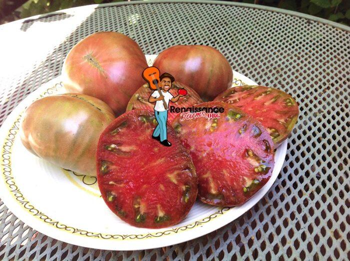 Carbon_Tomato