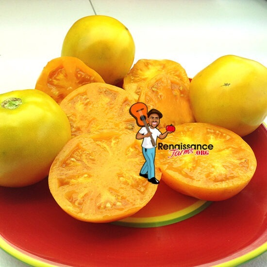 Caro Rich Heirloom Tomato