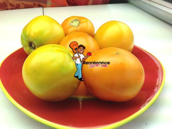 Caro-Rich-Tomato