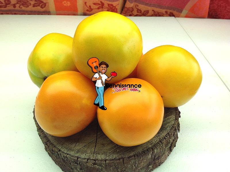 Caro Rich Tomato Yellow