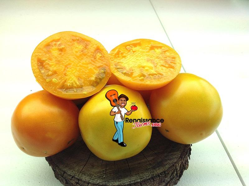 Caro Rich Yellow Tomato