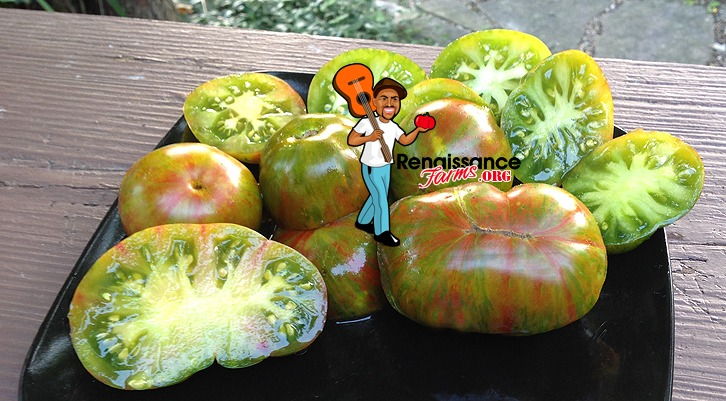 Delta Dwarf Tomato Pictures