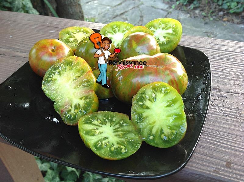 Delta Dwarf Tomatoes