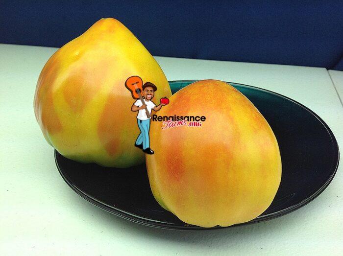 Desdemona's Heart Tomatoes