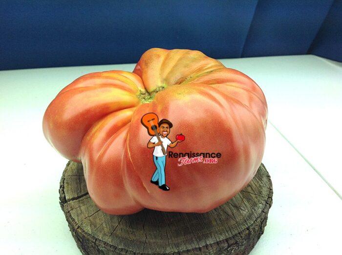 Donskoi Tomato