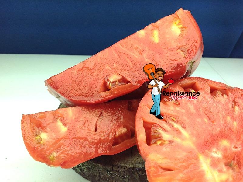 Donskoi Tomato Heirloom