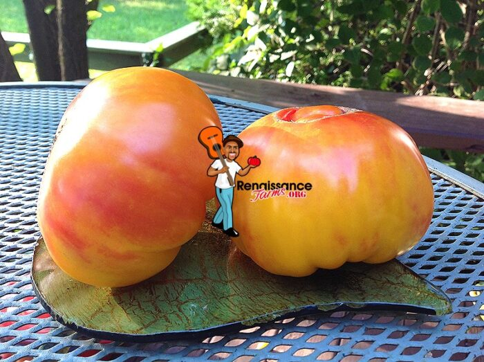 Dwarf Awesome Tomato 2018