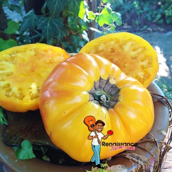 Dwarf Awesome Tomato