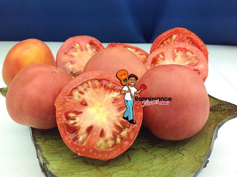 Dwarf Bushy Chabarovsky Tomato
