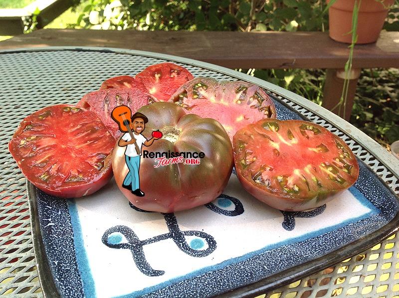Dwarf-Purple Reign-Tomato
