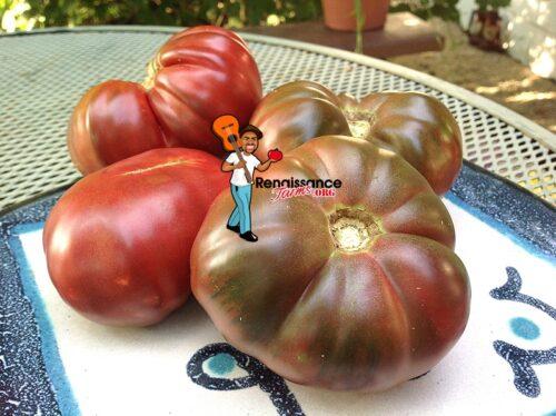 Dwarf Purple Reign Tomato Image