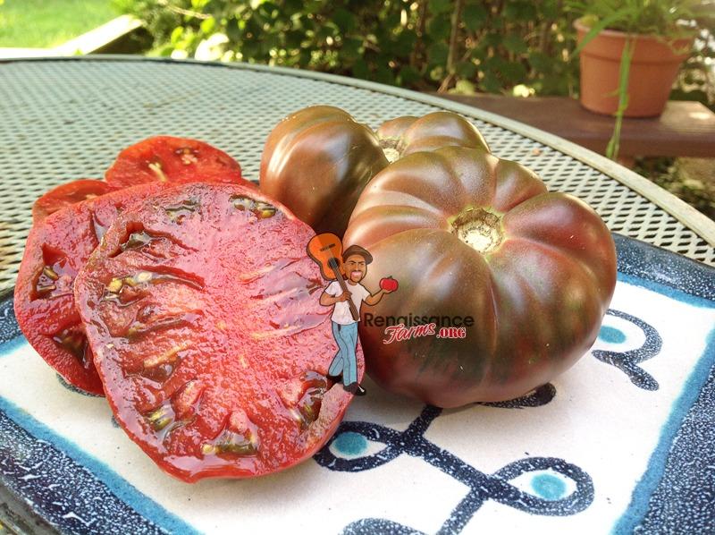 Dwarf Purple Reign Tomato