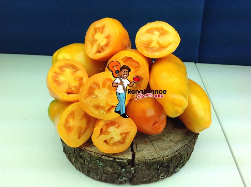 Eros Sauce Tomato