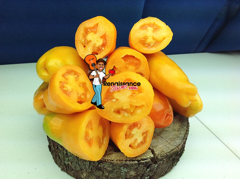 Eros Tomato Images