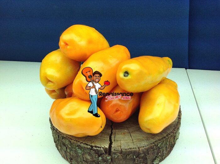 Eros Tomatoes