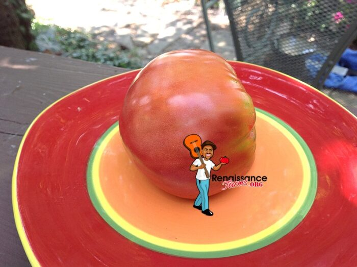Fatima-Tomato