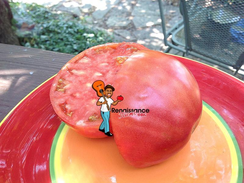 Fatima-Tomato-2019