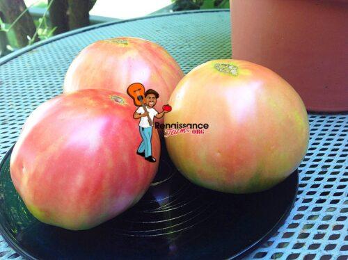 Fatima Tomato