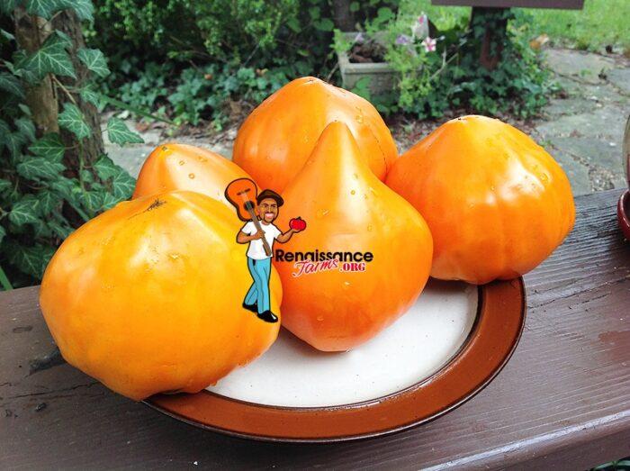 Fox-Nose-Tomato