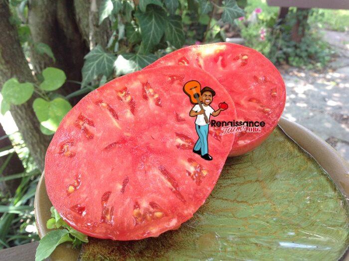 German Head Tomato 2018
